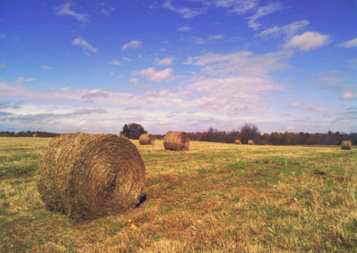 A late fall hay crop